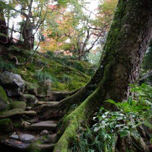 Jardin Gyokusen-en, Kanazawa, préfecture d'Ishikawa