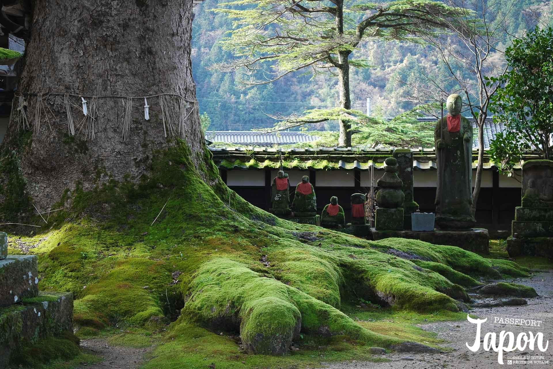 temple-daijoji-hyogo-arbre