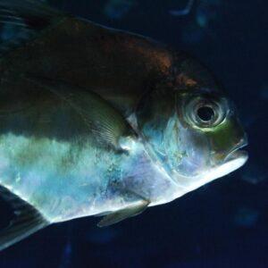 Poisson aquarium Umi Tamago, préfecture d'Oita