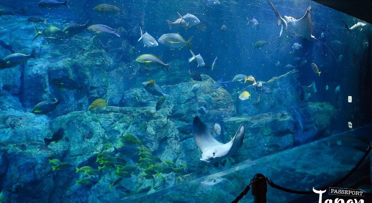 Aquarium Umi Tamago, préfecture d'Oita