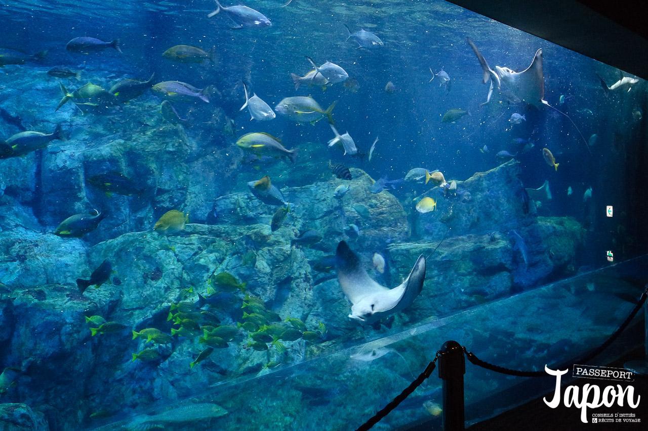 oita-aquarium-umi-tamago-raies