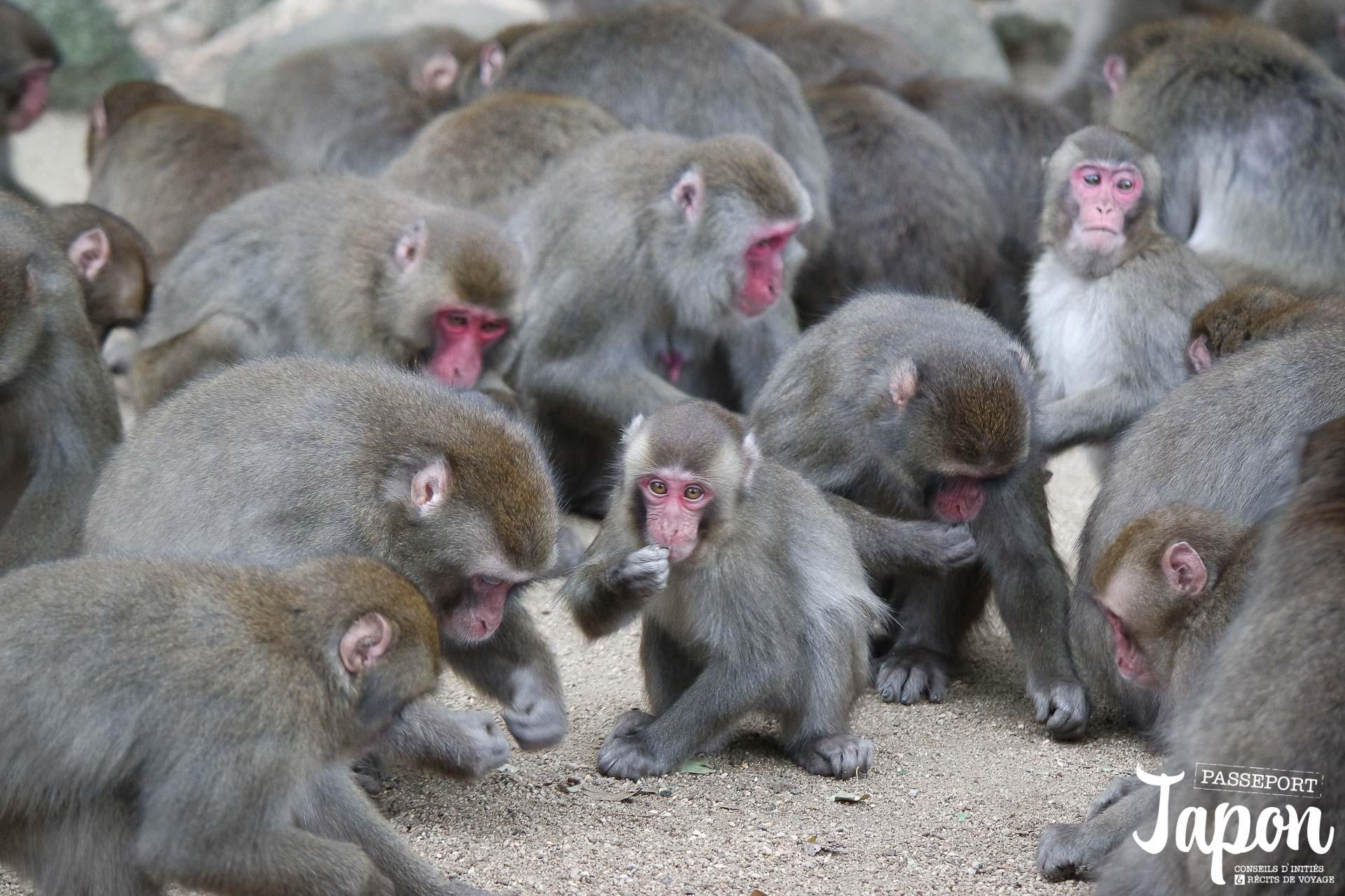 oita-parc-takasakiyama-repas-singes
