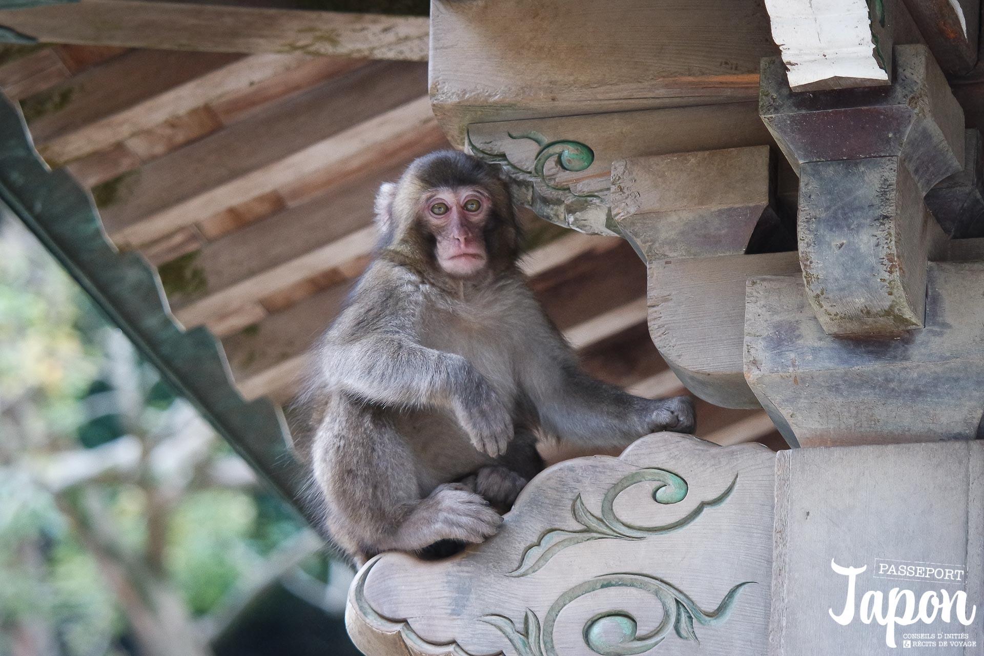 oita-parc-takasakiyama-singe-grimpeur