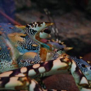 Rascasse aquarium Umi Tamago, préfecture d'Oita