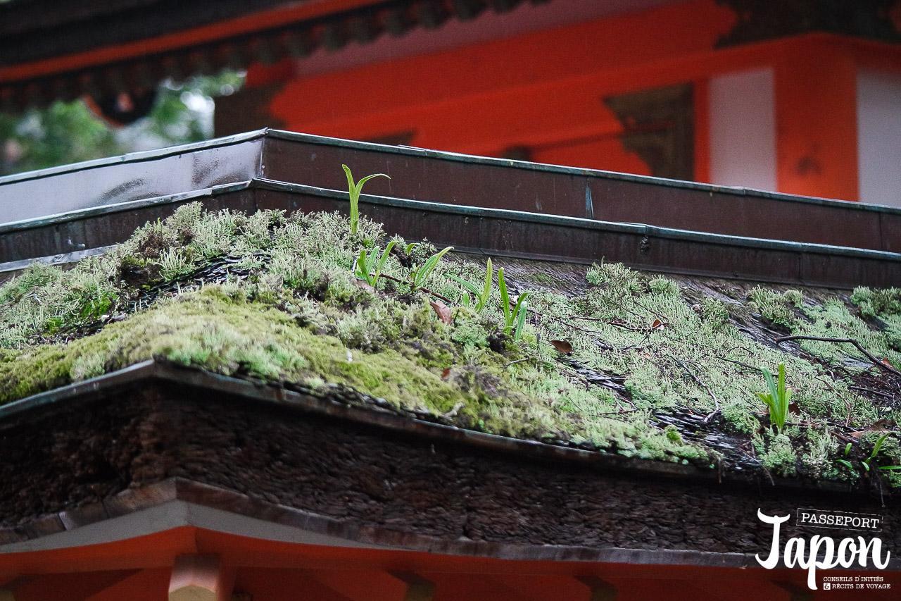 sanctuaire-uasa-jingu-oita-mousses-toits