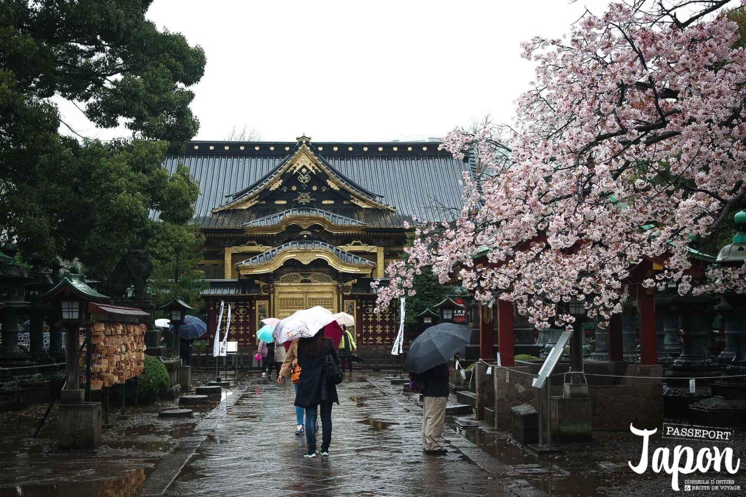 parc-ueno-sanctuaire-toshogu-hanami