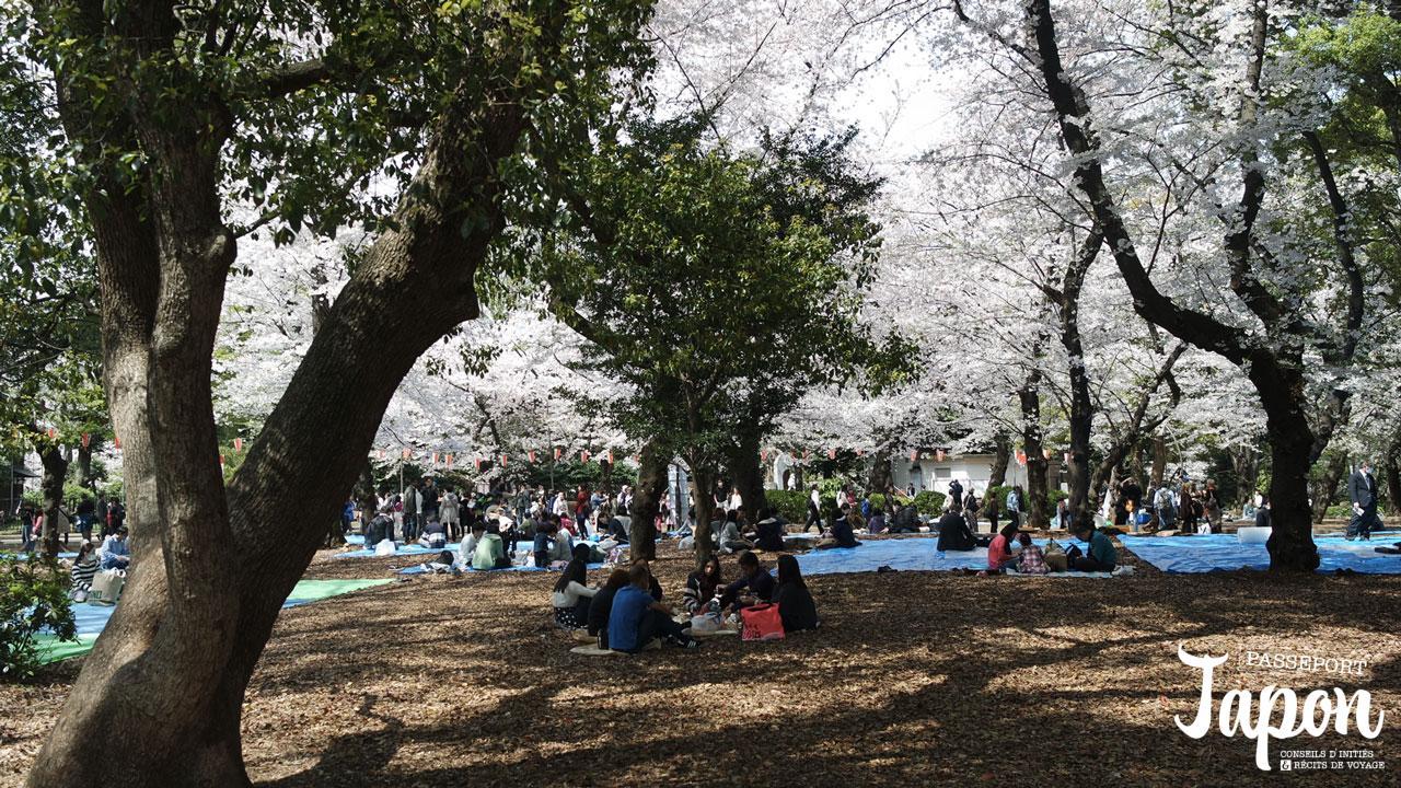 pique-nique-hanami-ueno-parc-tokyo-sakura