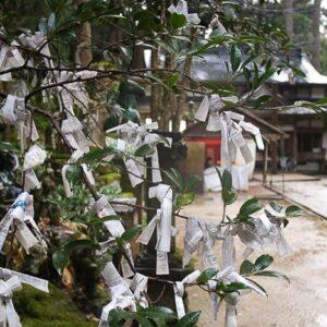 Omikuji au temple Sanbutsu-ji, Misasa, préfecture de Tottori