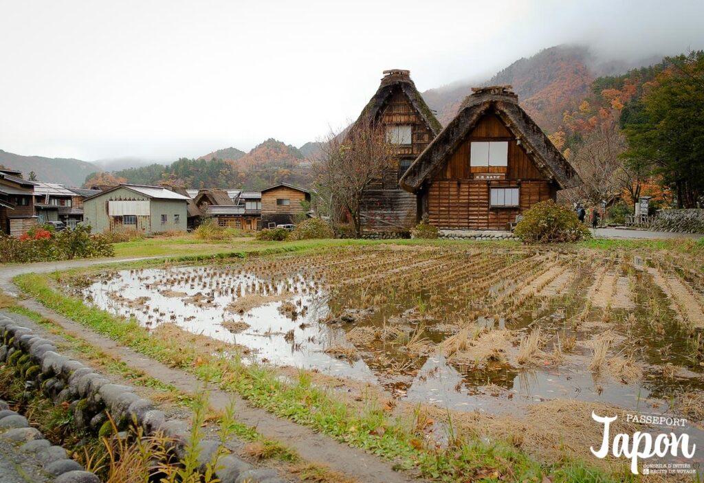 Rizière et maisons gassho-zukuri, Shirakawago, préfecture de Gifu