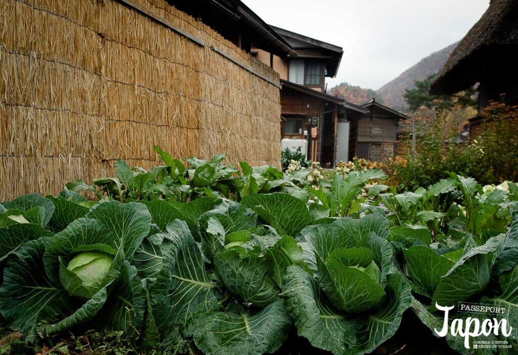 Potager à Shirakawago, préfecture de Gifu
