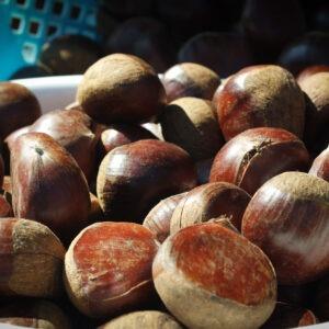 Marrons chauds sur le marché de Kunenan, Kanzaki, préfecture de Saga