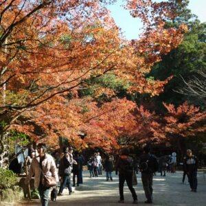 Momiji au sanctuaire Niiyama à Kunenan, Kanzaki, préfecture de Saga