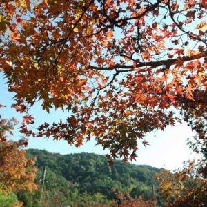 Momiji à Kunenan, Kanzaki, préfecture de Saga