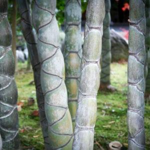 Bambous du jardin Shokado à Yawata, préfecture de Kyoto